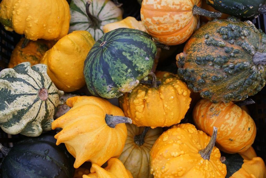 pumpkin-974557_1920