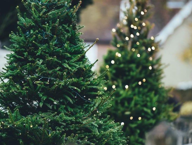 rsz_christmas-tree-